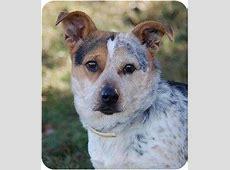 Blizzard   Adopted Dog   Mora, MN   Welsh Corgi/Blue