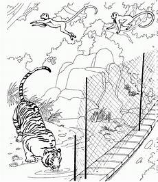 Malvorlagen Tiger Pool Free Printable Zoo Coloring Pages For With Images