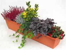 Pflanzen Winterhart Balkon - bepflanzter balkonkasten 80 cm wintergr 252 n im