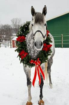 the voice of christmas horses christmas animals horses