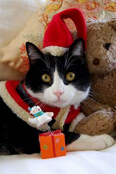 merry christmas from oliver christmas cats christmas animals cats