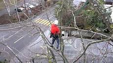 bäume schneiden bei baum schneiden pflegen
