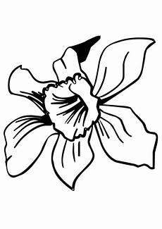 dibujos de la flor nacional de venezuela dibujos para pintar flores orqu 237 dea dibujos para cortar y colorear