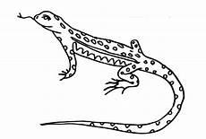 Ausmalbilder Reptilien Malvorlagen Ausmalbild Eidechse Kostenlos Kinder Ausmalbilder
