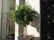 The World 180 S Tree Species How To Take Care Of Ficus
