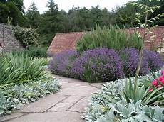 geliebte welche pflanze passt zu lavendel zp76