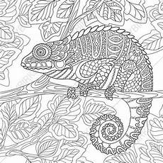 coloring pages chameleon zentangle doodle coloring