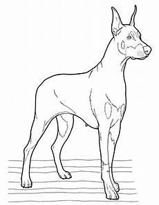 ausmalbild hund in 2020 ausmalbilder hunde malvorlagen