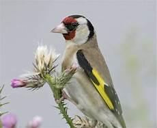 einheimische vögel im winter heimische winterv 246 gel so erkennst du sie auf einen blick