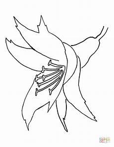 orquidea de venezuela para colorear orchid flower coloring page free printable coloring pages