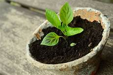 stecklinge ziehen 5 pflanzen die du einfach z 252 chten und