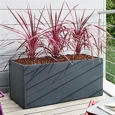 Plante Pour Bac A Fleur Exterieur Tropico3 Fr