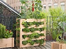 plante pour terrasse ma terrasse