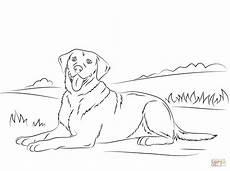 Hunde Ausmalbilder Labrador Labrador Retriever Coloring Mit Bildern