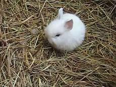 5 kaninchen bunny baby 180 s 2 3 wochen alt