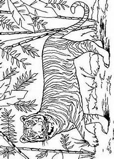 tiger ausmalbilder 08 malvorlagen tiere ausmalbilder