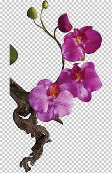 10 Gambar Orchid Flowers Gambar Bunga Hd