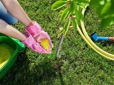 Obstbäume Pflanzen Wann - obstb 228 ume im fr 252 hjahr d 252 ngen