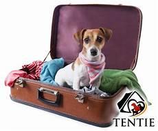 Umzug Mit Hund Hundehaltungsverbot Erlaubt Tentie De