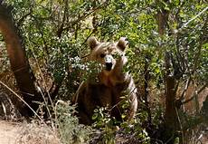 wildlife topics al ma wa for nature wildlife reserve our sanctuaries caigns topics four paws south