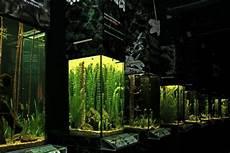 malvorlagen unterwasserwelt schrems zeichnen und f 228 rben
