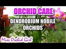 17 best images about orchid video tutorials pinterest seasons all flowers and minis