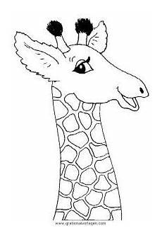 malvorlage giraffe einfach giraffen 45 gratis malvorlage in giraffen tiere ausmalen
