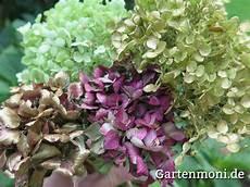 Hortensien Trocknen Und Verzieren Gartenmoni Altes