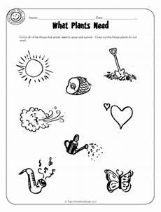 needs of plants worksheets kindergarten 13579 plants needs worksheet http www pic2fly plants needs free images frompo