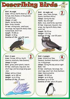 describing birds worksheet free esl printable worksheets made by teachers