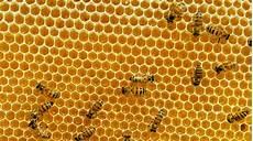 Lebah Membuat Penyimpanan Madu Dengan Bentuk Yang Paling