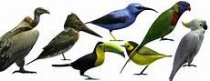 how to make a 3d bird model 58 best free 3d bird models page 2 of 2 rockthe3d