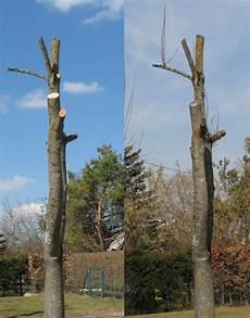 bäume schneiden bei b 228 ume schneiden bund naturschutz in bayern e v
