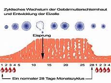 normaler menstruationszyklus