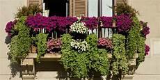 6 Plantes Id 233 Ales Pour Un Balcon Fleuri Toute L 233 E