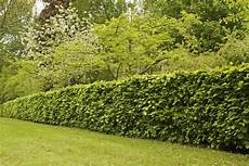 Recommended Plants For Hedges In Southwest Florida Ehow