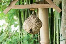 wasp nest removal mistakes debugged