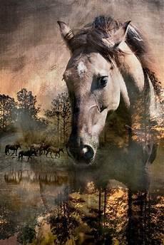 Ausmalbilder Pferde Norweger Norweger Pferde Bilder Und Spr 252 Che F 252 R Whatsapp Und