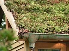 toit terrasse vegetal la v 233 g 233 talisation de toiture en ville tendance 233 ph 233 m 232 re