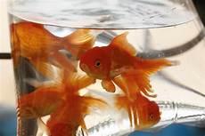 wissenswertes zu aquariumfischen hornbach