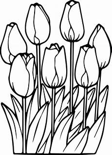 tulip flower coloring pages at getdrawings free