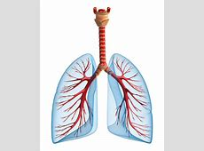 fibrosis in lungs disease