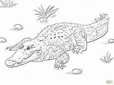 alligators and crocodiles coloring pages and