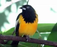 cuales son los simbolos naturales del estado carabobo la musica los simbolos naturales de venezuela