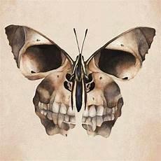 Butterfly Skull Skull Freak
