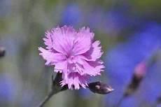 welche pflanzen mö schnecken nicht schneckenresistente blumen pflanzen eine umfassende