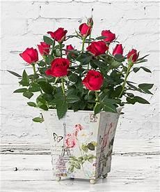 blumen schenken bedeutung valentins blumenversand mit einem klick freude schenken