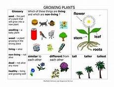 science plants ks1 worksheets 13580 ks1 growing plants science vocabulary and spelling list word mat 31 teaching activities to try