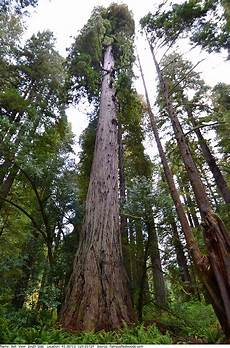 5x7ft Tree Small Bell Photography by Bell Tree Redwoods