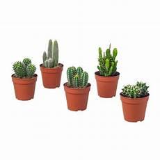 vasi per cactus cactaceae pianta da vaso ikea
